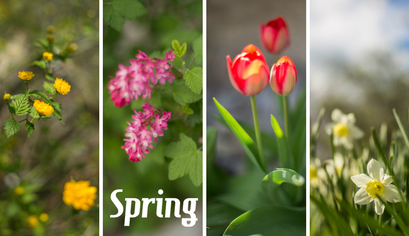 collage_spring