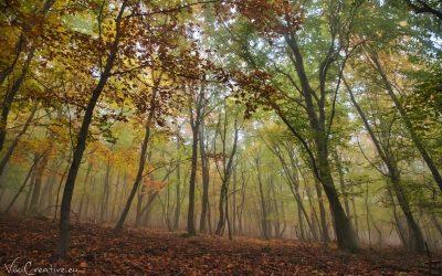 Jesenná prechádzka – 29.10.2020