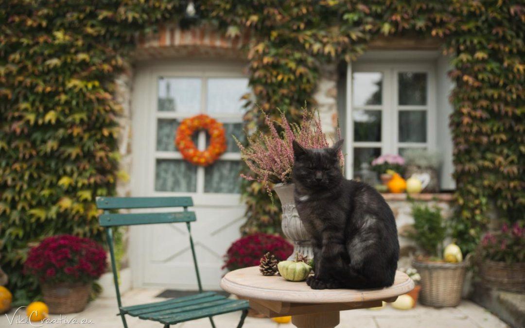 Farebná jeseň v záhradke